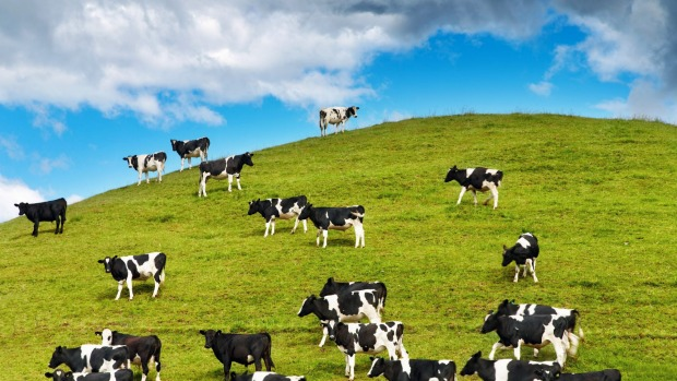 The news comes after a 1.7 per cent rise in world dairy prices at the GlobalDairyTrade auction overnight.